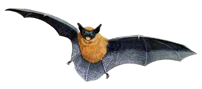 Event Advertising - Bat Walks