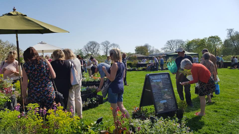 Event Advertising Summer Plant Fair