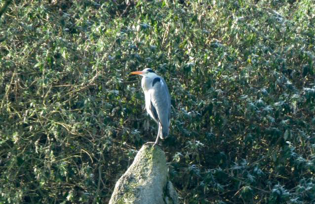 Big Garden Bird Watch - RSPB