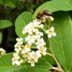 Honey Bee Video Education Service