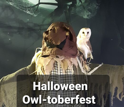 poster for Jambs Owls Owl-toberfest